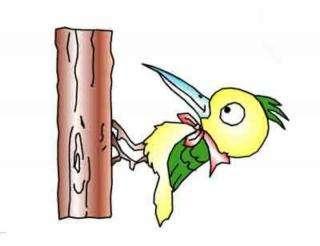 关于鸟的故事