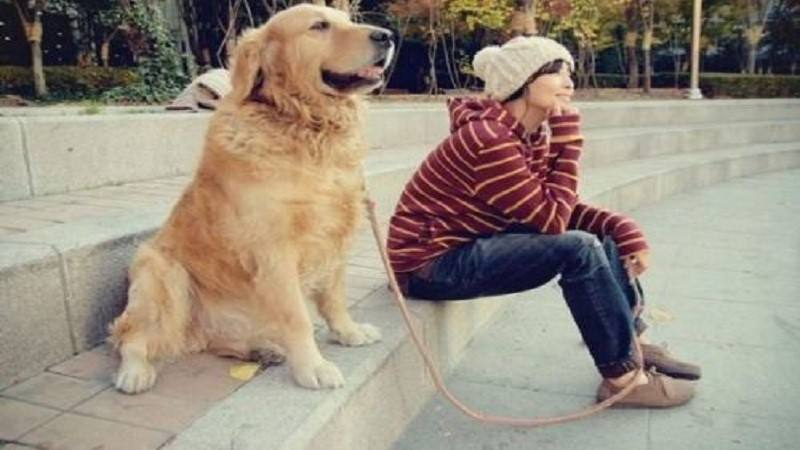 狗的感人故事