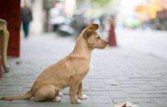流浪狗的故事