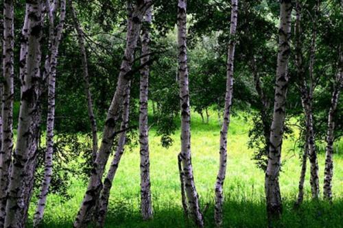 世界上真的有比钢铁还硬的树吗?