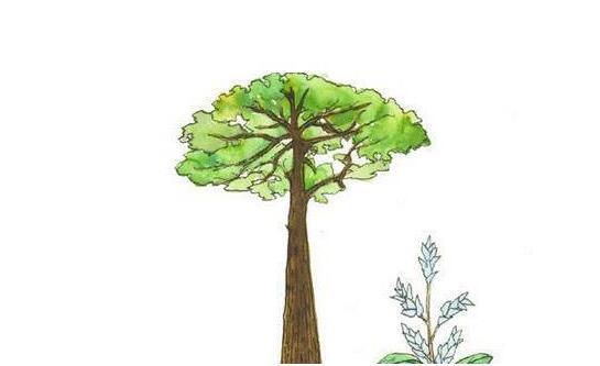 寓言小故事:望天树与铁刀木