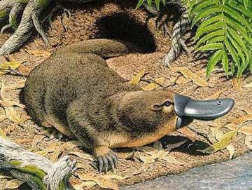 科学童话:走上河岸的鸭嘴兽